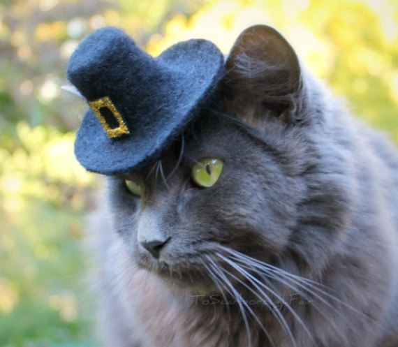 Cat in a pilgrim hat